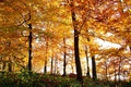 Picture nature, trees, autumn, forest, leaves