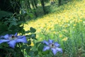 Picture summer, nature, flowers, forest, glade
