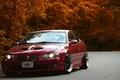 Picture road, autumn, trees, red, tuning, pontiac gto, Pontiac