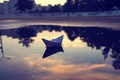 Picture clouds, sunset, reflection, heaven, the evening, puddle, paper boat