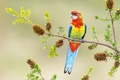 Picture bright, branch, parrot, bird