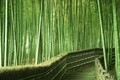Picture bamboo, greens, Japan