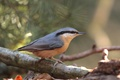 Picture blur, branch, glare, tree, bird