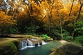 Picture forest, stream, waterfall, trees, the bushes, autumn, moss