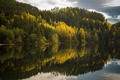 Picture lake, forest, nature
