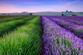 Picture the evening, house, field, summer, England, lavender, sunset