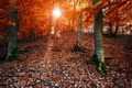 Picture forest, sun, leaves, fall, colors, foliage, Autumn, the sun, autumn, forest