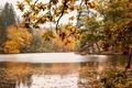 Picture trees, lake, foliage, Autumn, trees, autumn, lake, leaves, fall