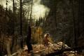 Picture forest, girl, stones, smoke, Lichon